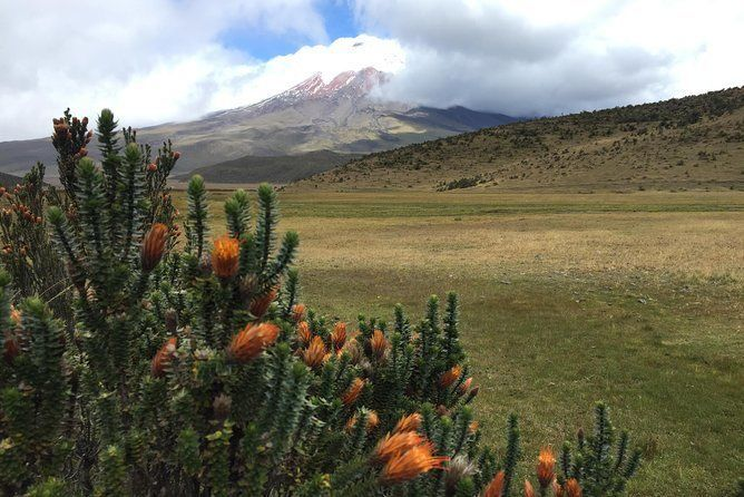 Full Day Cotopaxi & The Chuquiragua Trail