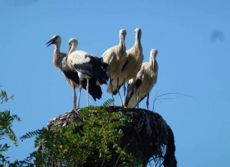 7-day expedition through the Danube Delta Biosphere Reserve