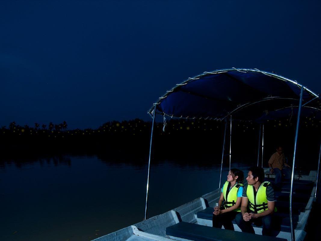 Kuala Selangor Firefly Park Private Night Tour from Kuala Lumpur