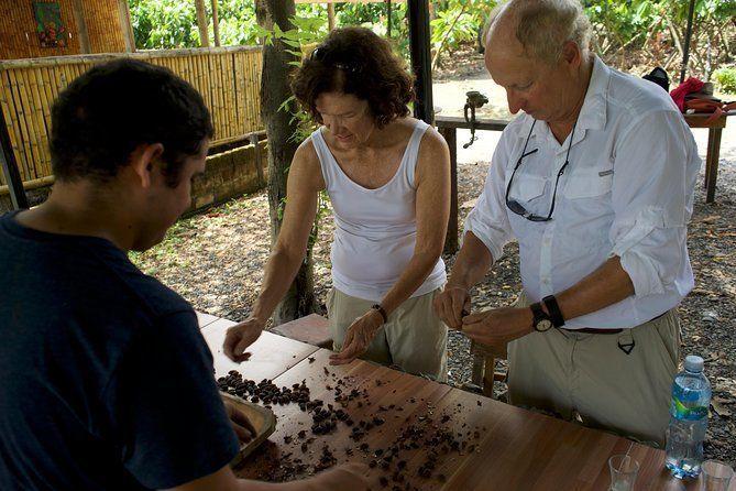Cocoa farm and Chocolate making!