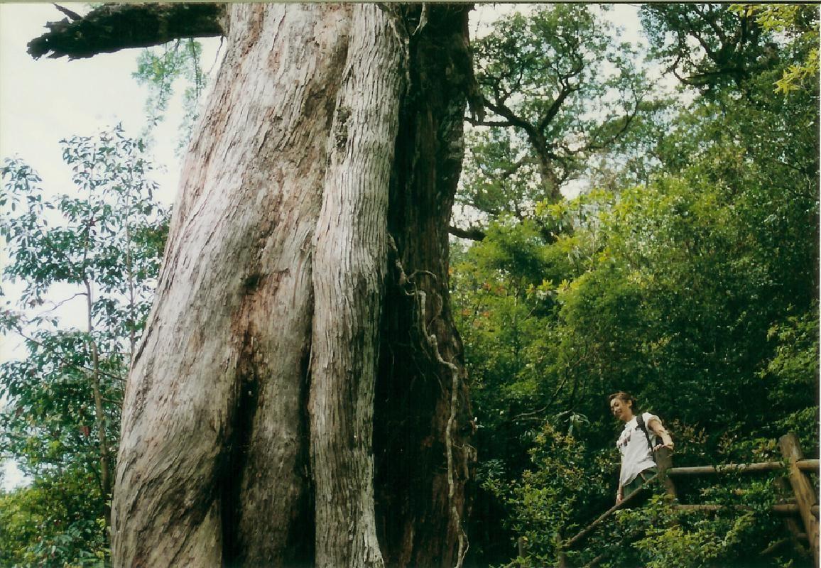 Extended Shiratani Unsuikyo Trekking with Taikoiwa in Yakushima Island