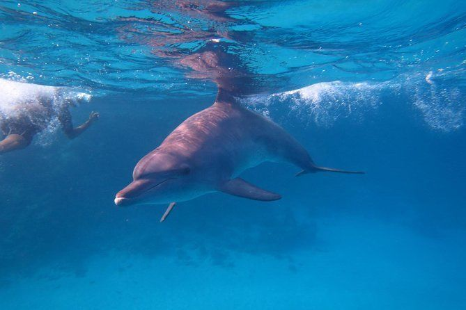 Overnight Snorkeling Trip At Satayh Dolphin Reef From Portghalib