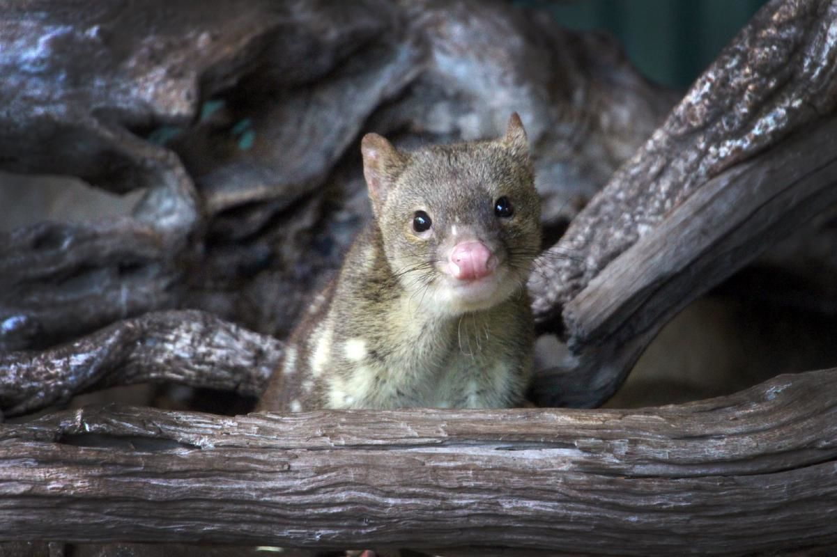 Private Tour of Wildlife Habitat in Cairns with Breakfast or Lunch