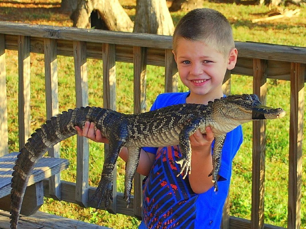Wildlife Park Safari and Alligator Encounter