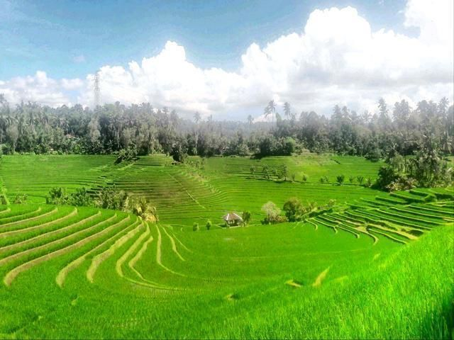 Private Tour Bali: Beauty of the North