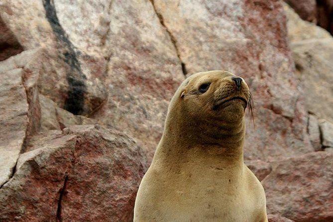 Ballestas Islands Group Tour from Paracas