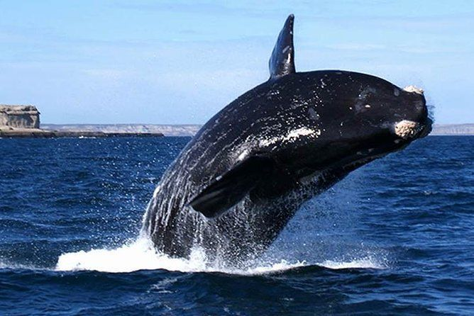 Cape Town: HERMANUS WHALES & WINE Private Full Day Tour