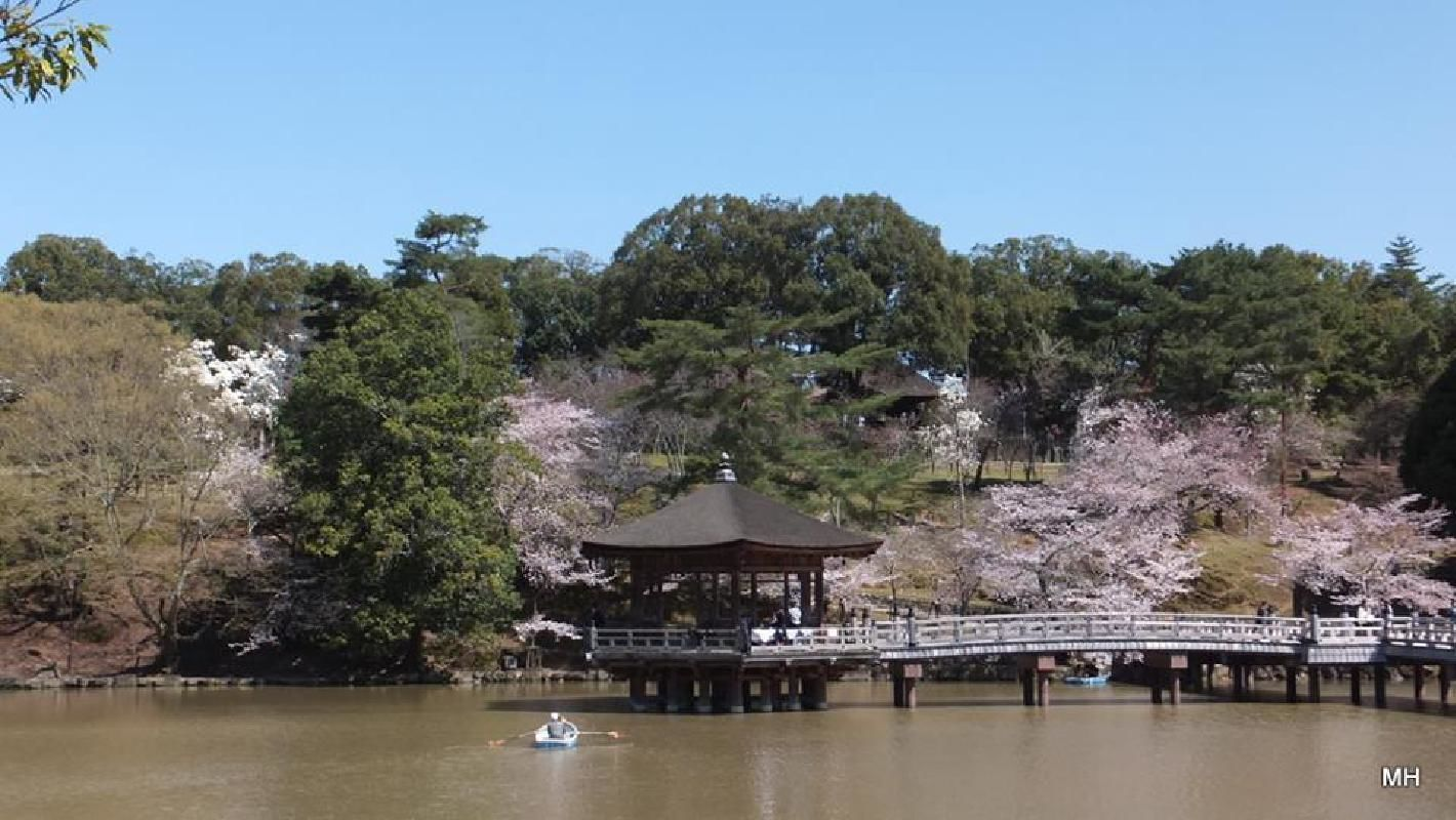 Early Morning Nara Park and Historical Temple Sightseeing Taxi Tour in Nara