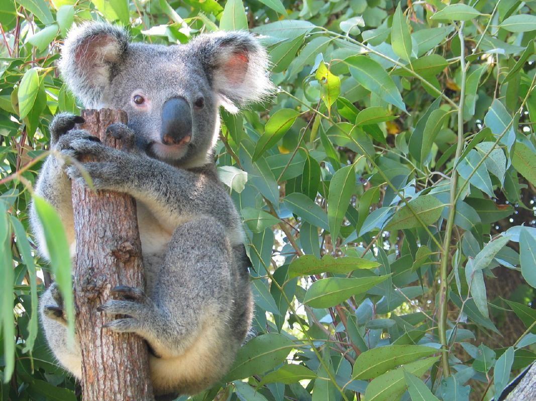 Wildlife Habitat Port Douglas Admission Ticket