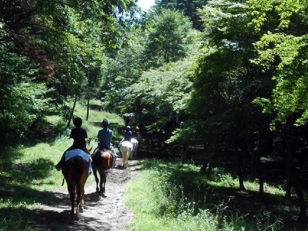 Yatsugatake Mountain Horseback Riding with Tea or Dessert