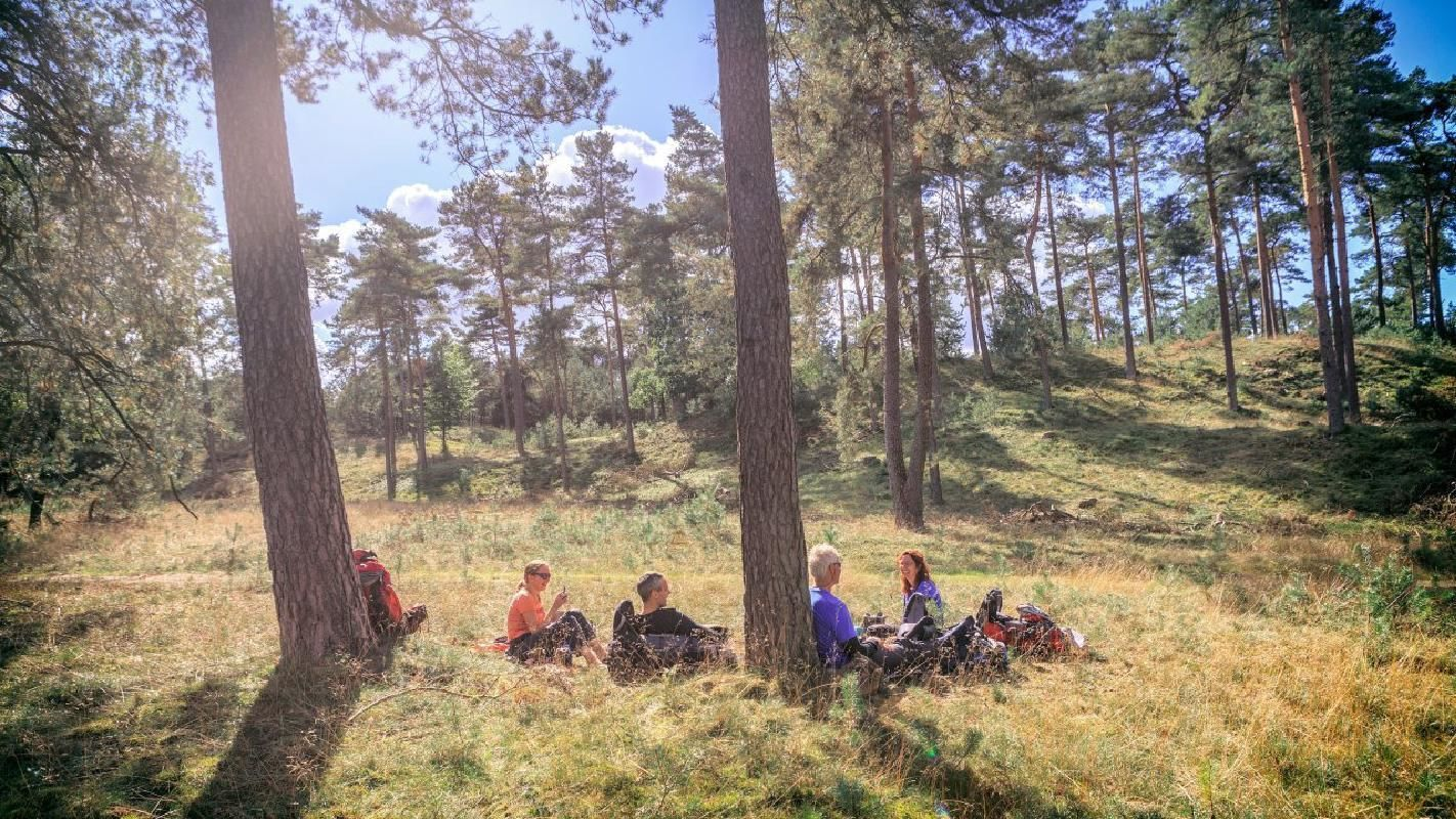 Kroller-Muller Museum and Hoge Veluwe National Park Tour with Hotel Pick-Up