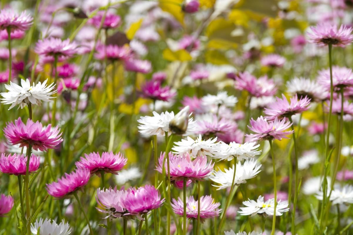 Perth Wildflowers Full Day Tour with Lunch