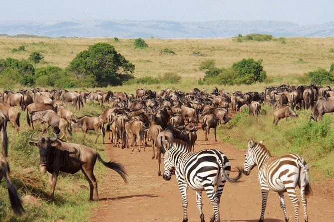 4 Days Great Wildebeest Migration Safari Maasai Mara 2020