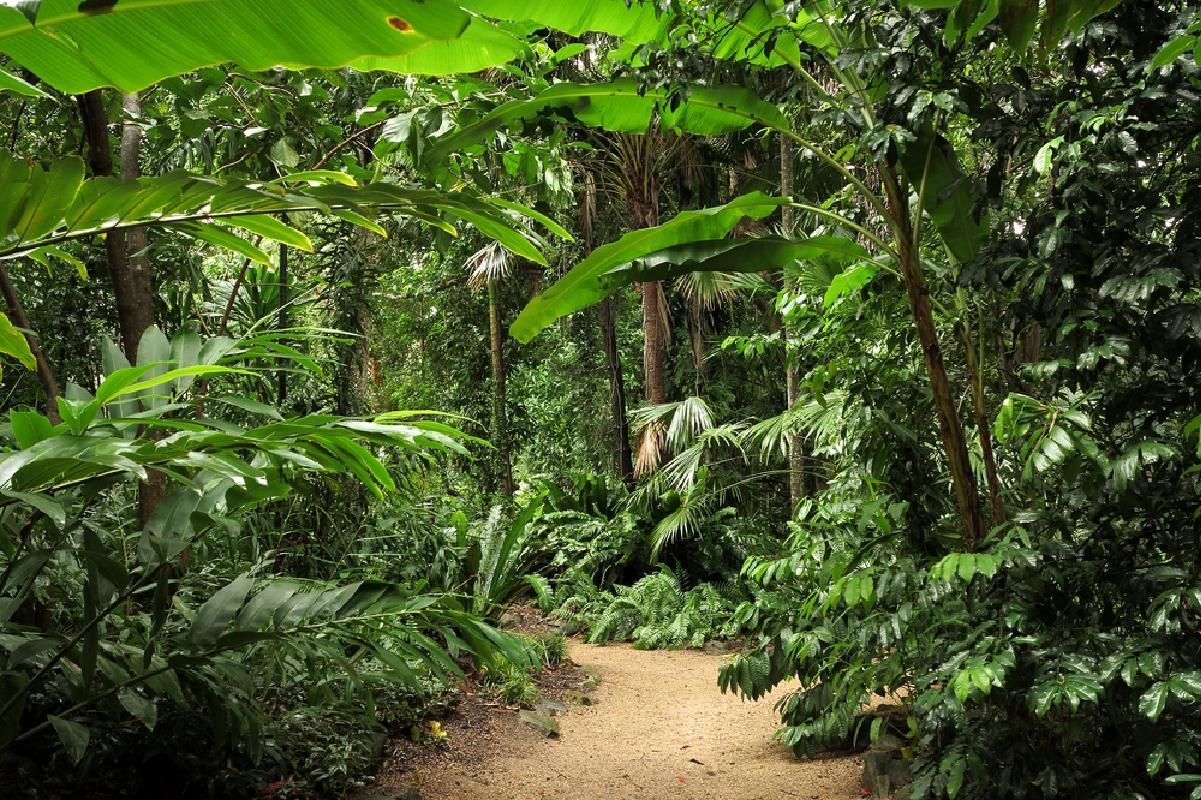 Cairns City and Nature Highlights Afternoon Tour with Hotel Pick-up