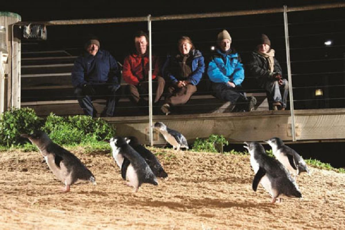 Phillip Island Day Tour with Penguin Parade and Seal Rocks Cruise from Melbourne