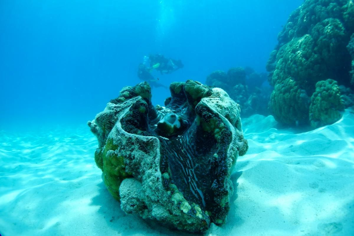 Introductory Great Barrier Reef Scuba Diving in Michaelmas Cay