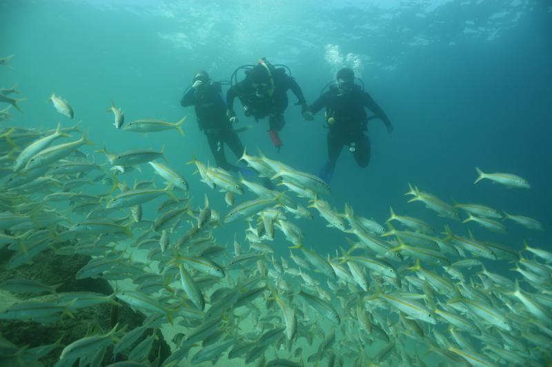 Discover Scuba Diving - Cabo San Lucas