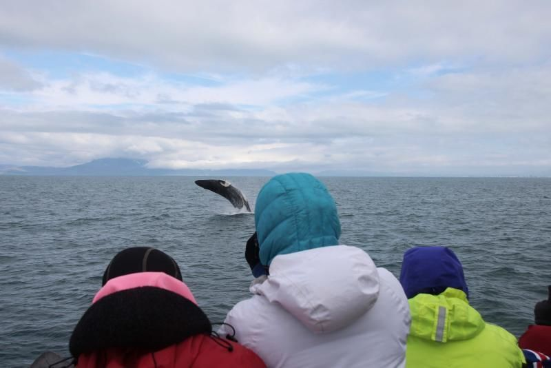Reykjavik: Whale watching with the boat Andrea