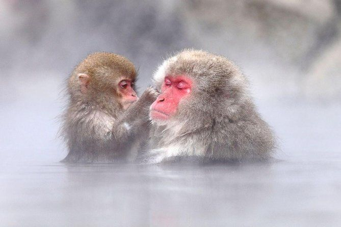 1-Day Snow Monkeys, Zenko-ji Temple & Sake in Nagano Tour