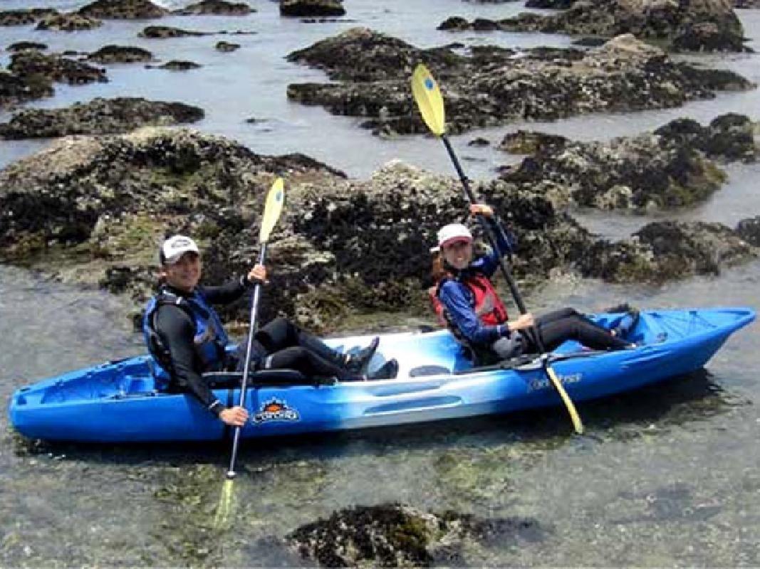 Half Day Sea Kayak and Beach Walk Tour from Zushi