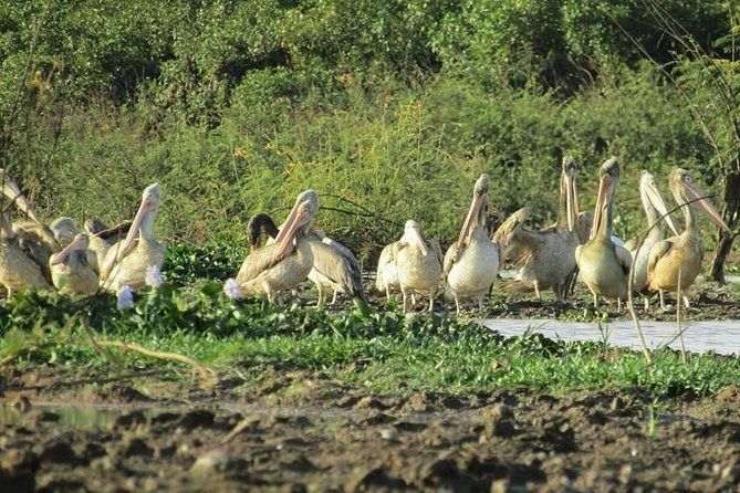 Village Birdwatching and Oxcart Riding from Siem Reap