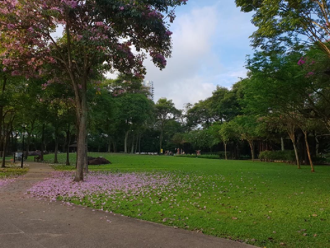 Singapore Half-Day Heartlands Tour with Toa Payoh Town Park Visit