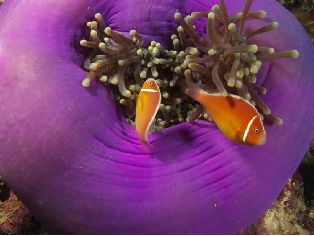 4-Day Great Barrier Reef Diving Adventure from Cairns with Accommodations