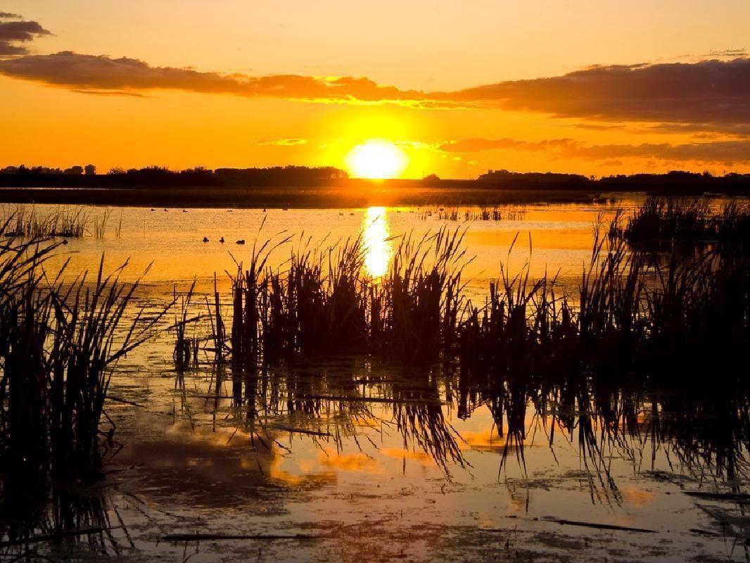 Everglades Evening Airboat Ride Adventure & Wild Florida Admission