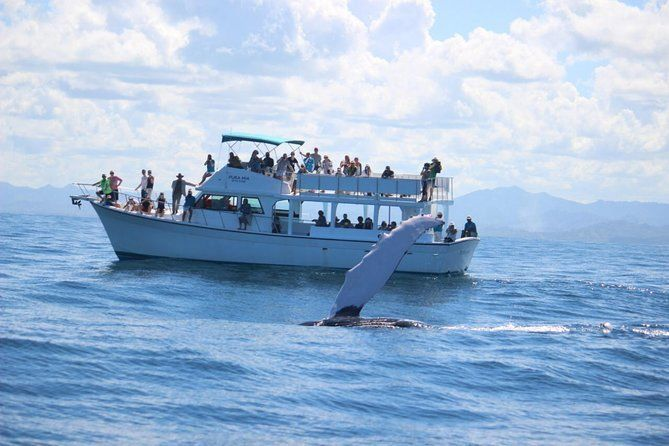 From Santo Domingo: Famous Whale Samana and Cayo Levantado Beach with Whale Biologist