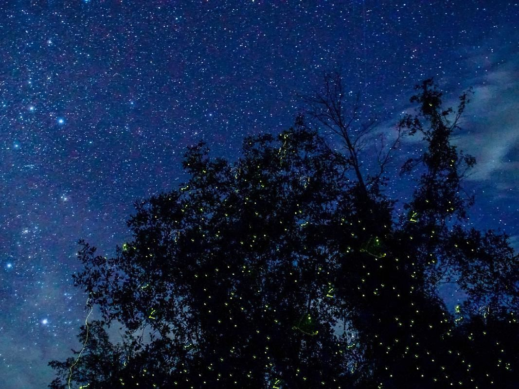 Evening Fireflies and Fishing Village Tour from Kuala Terengganu