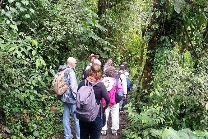Full-Day Private Birding Tour in La Paz Refuge & Alambi Hummingbird Sanctuary