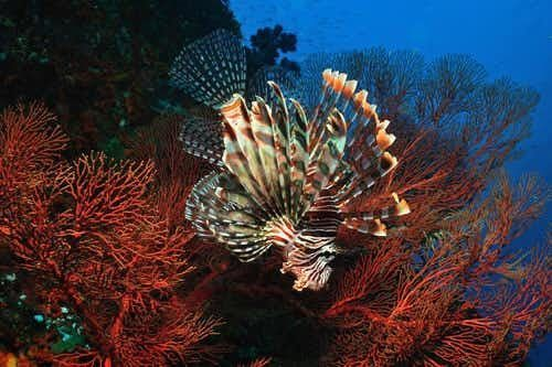 Best of East Coast Bali Diving Safari - 7 Days