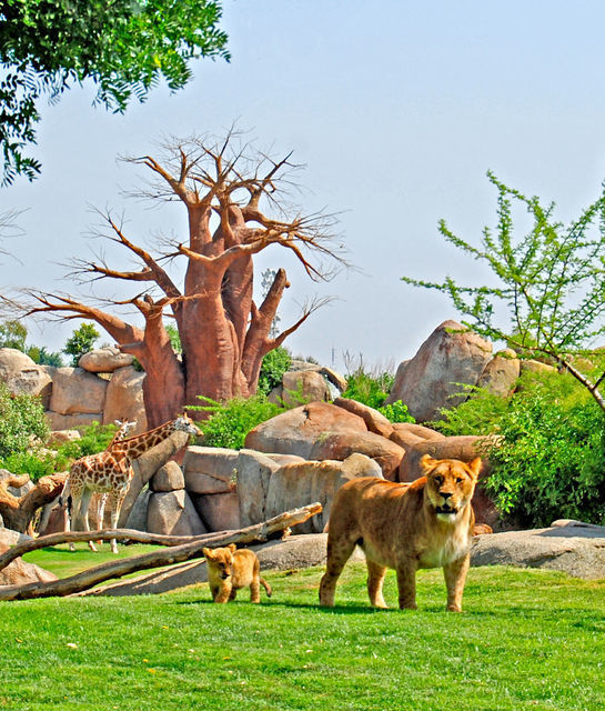 Bioparc Valencia Full-Day Entrance: The Heart of Africa