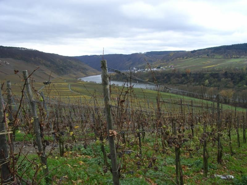 Up and down the Moselle River