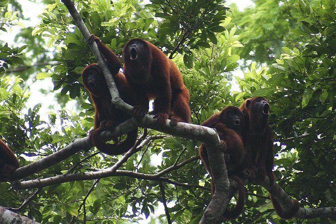 4-day Tambopata Ecolodge Rainforest Adventure Tour