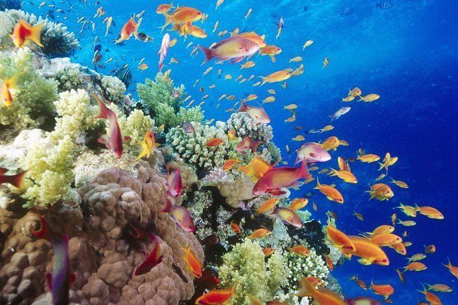 Ras Mohammed Day Snorkeling Tour By Boat From Sharm El Sheikh
