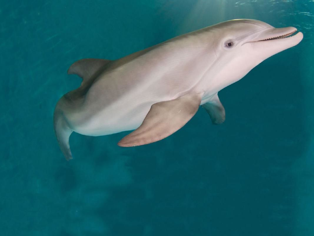Clearwater Marine Aquarium Admission & Winter's Dolphin Tale Exhibit
