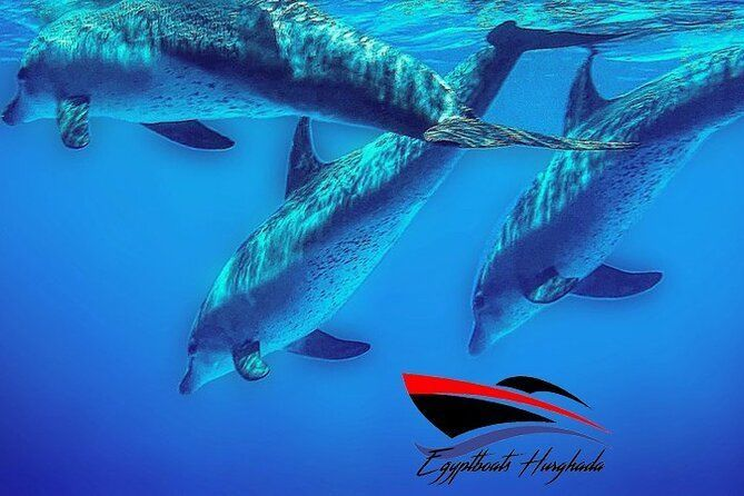Private 4 hours snorkeling with dolphins trip by a speed boat