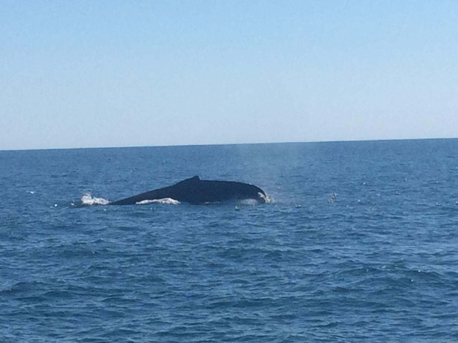 Boston Whale Watching Cruise by High-Speed Catamaran