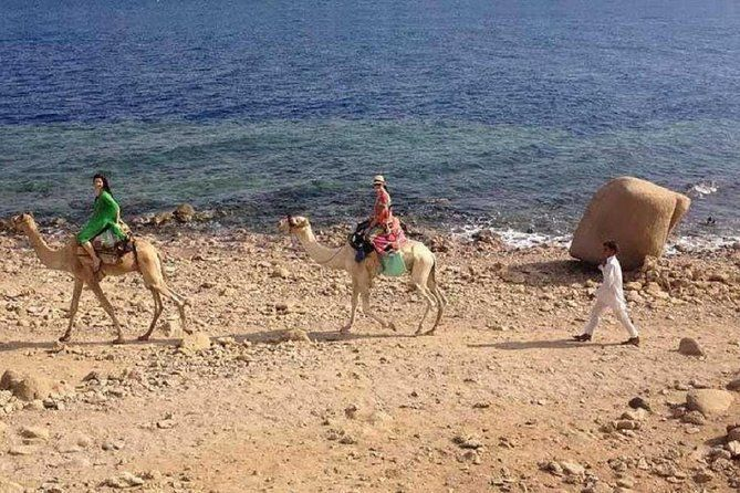 Snorkel At Blue Hole, White Canyon Safari & Camel Safari From Sharm El Sheikh