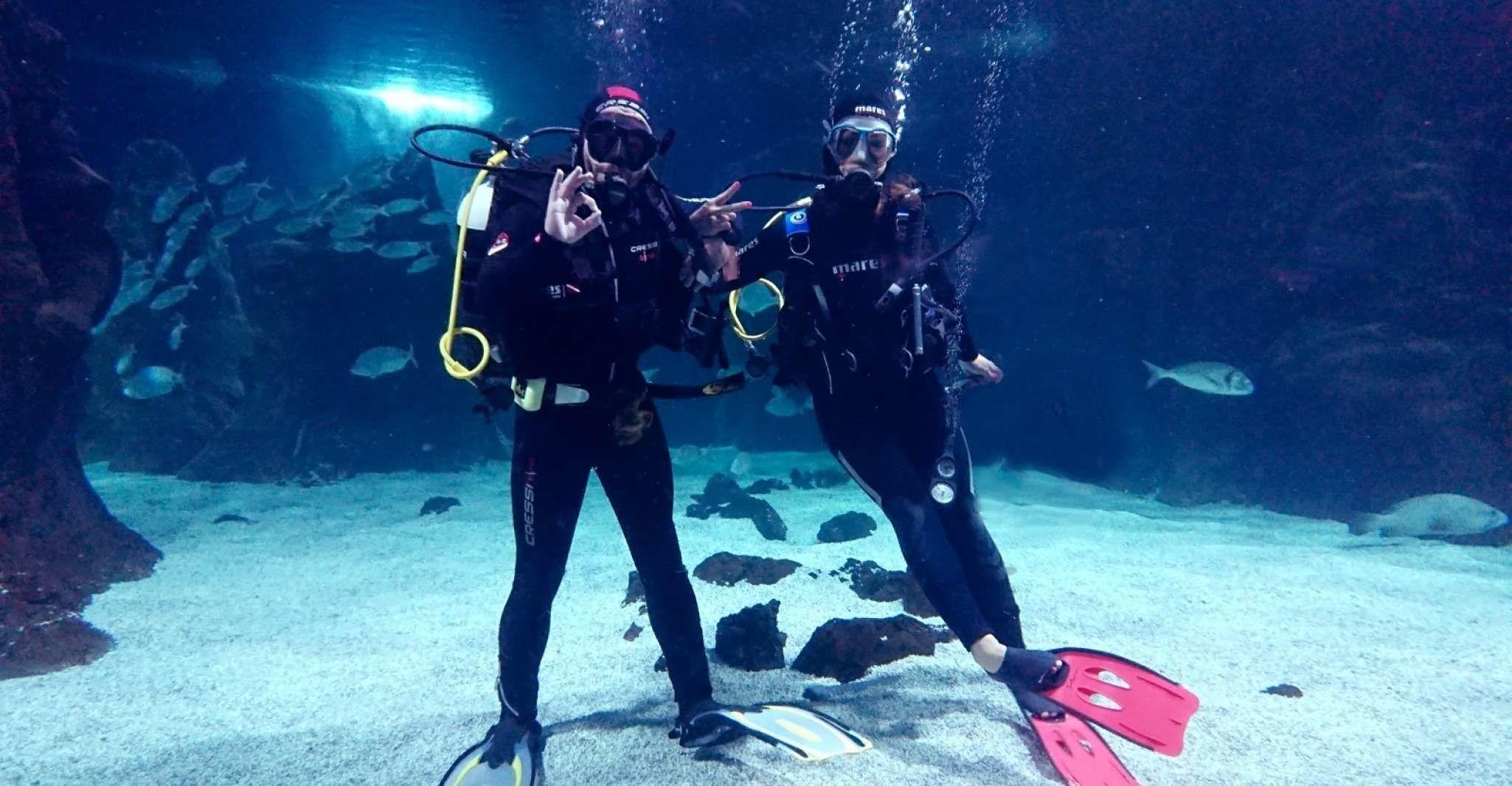 Lanzarote: Aquarium Entry Ticket