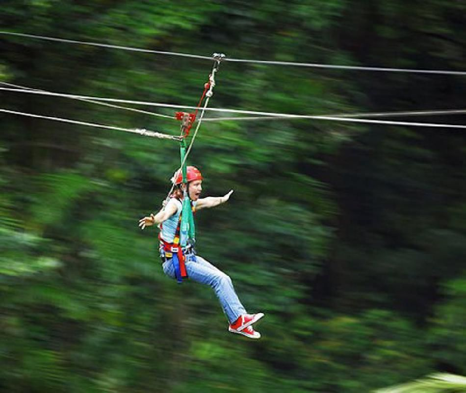 Cape Tribulation and Daintree Wilderness Full Day Tour with Jungle Surfing