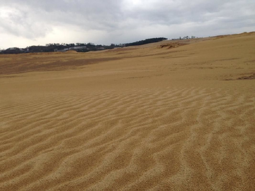 Half Day Dune and Pear Chartered Sightseeing Taxi Tour from Tottori