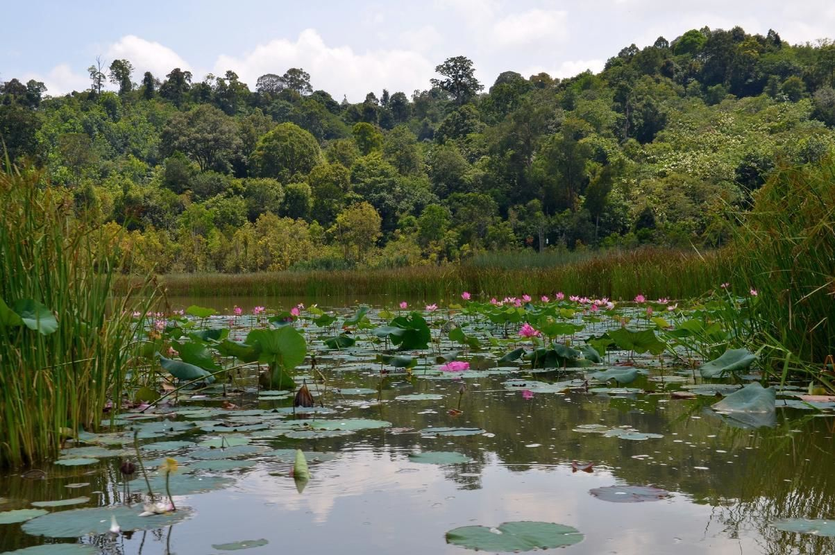 Lake Chini Private Tour with Boat Ride and Jakun Settlement Visit