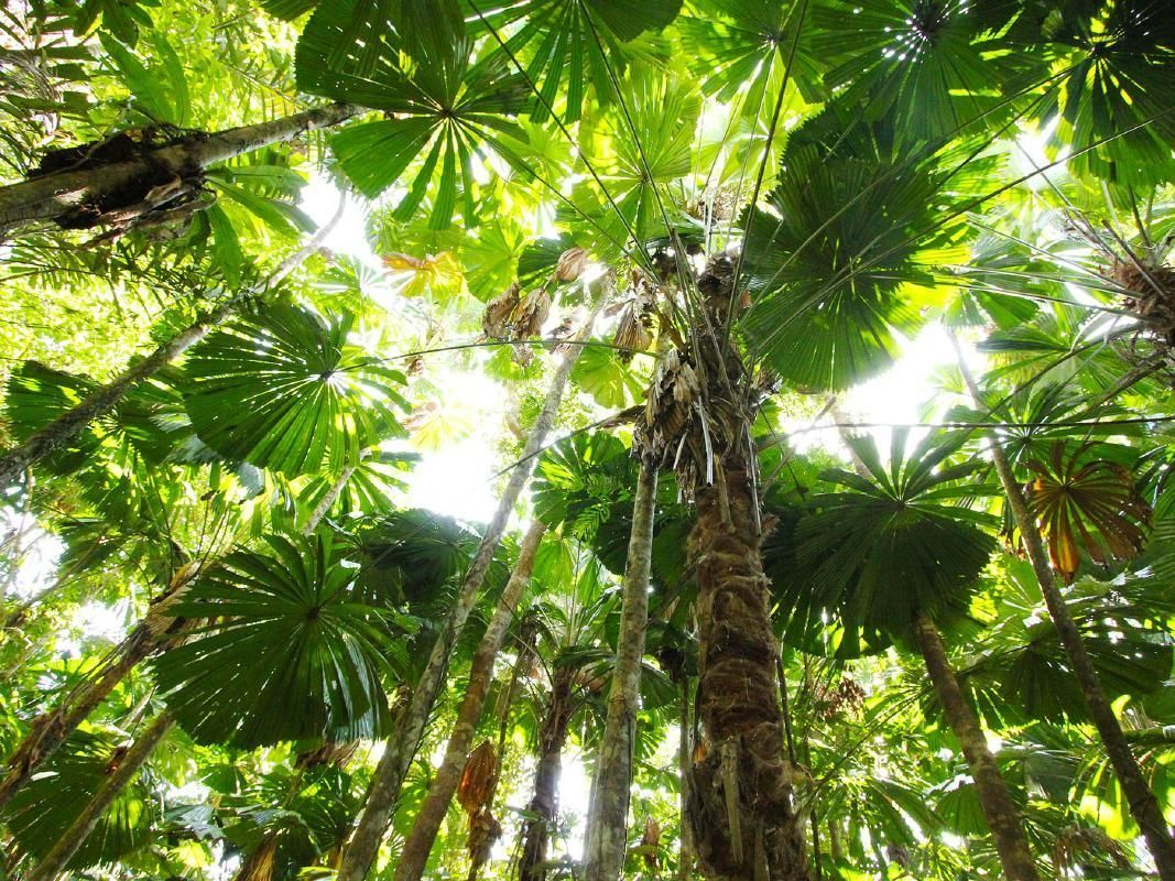 Cape Tribulation and Daintree Wilderness Tour with Breakfast Option