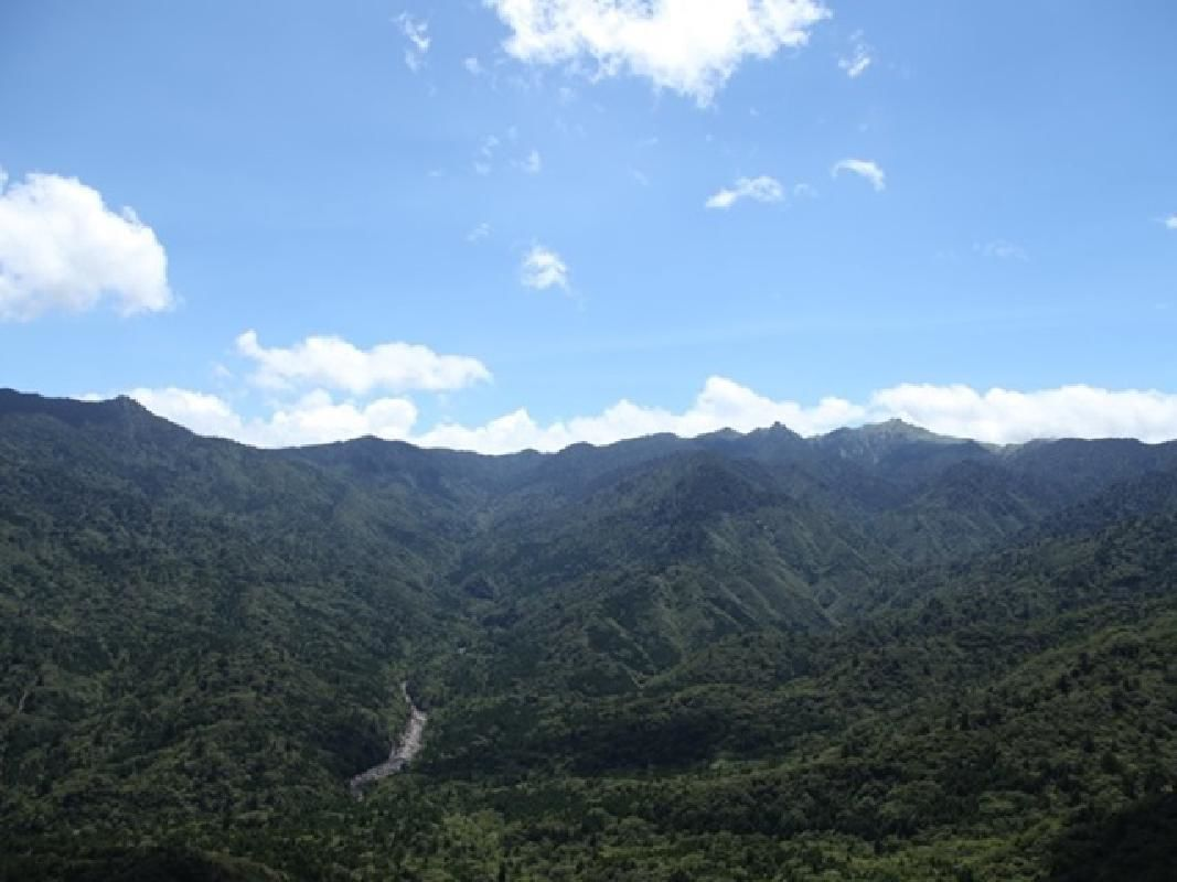Trekking Adventure to Yaku Cedar Land or Western Forest Trail in Yakushima