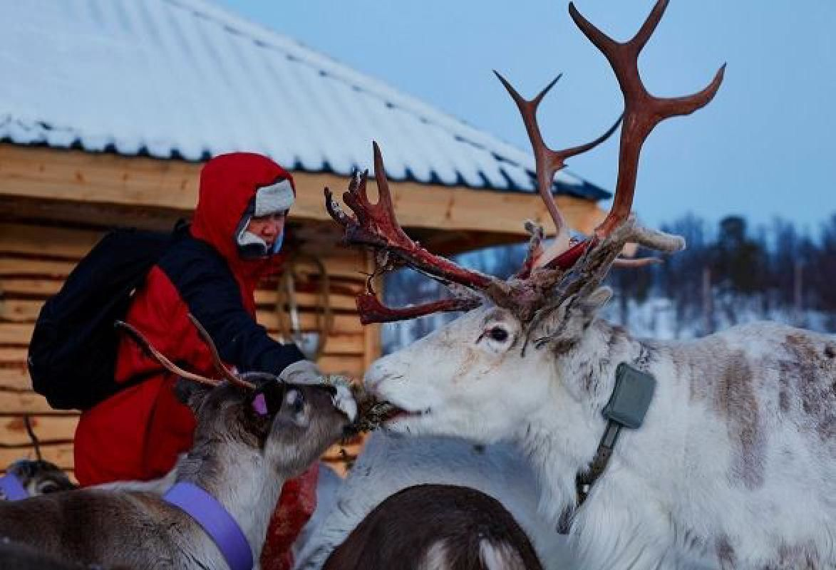 Reindeer Farm and Snowmobile Ride from Tromso