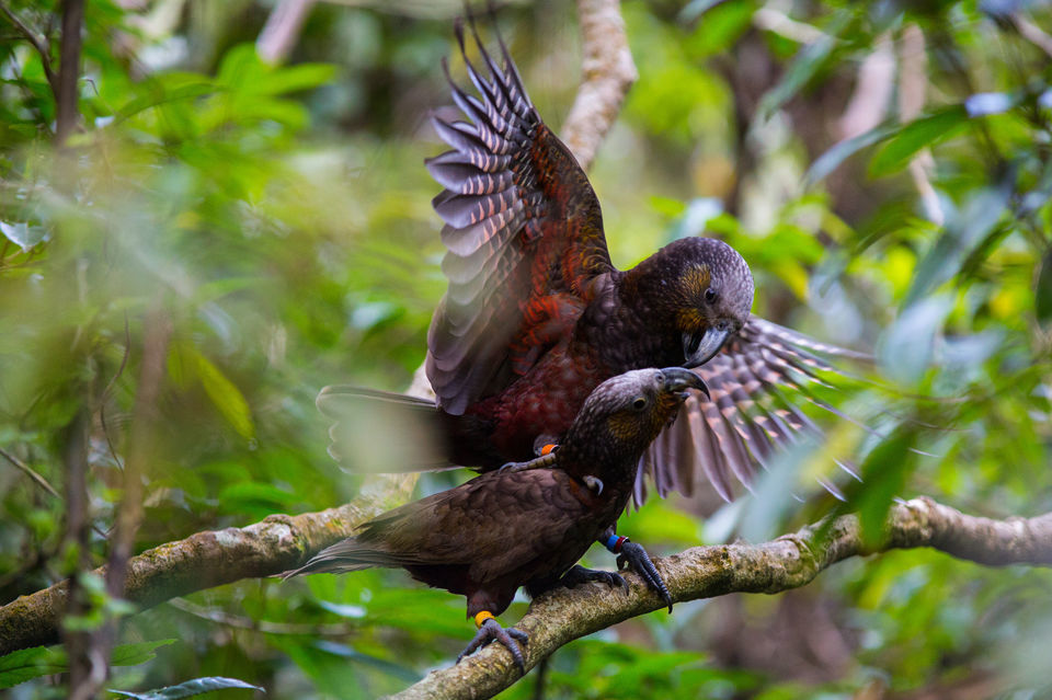 Wellington: 2-Hour Guided Zealandia Walking Tour