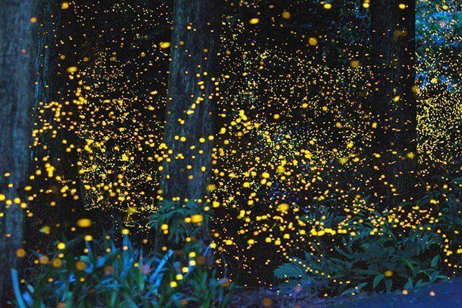 Kota Kinabalu K2 Fireflies Sunset River Cruise Tour with Dinner