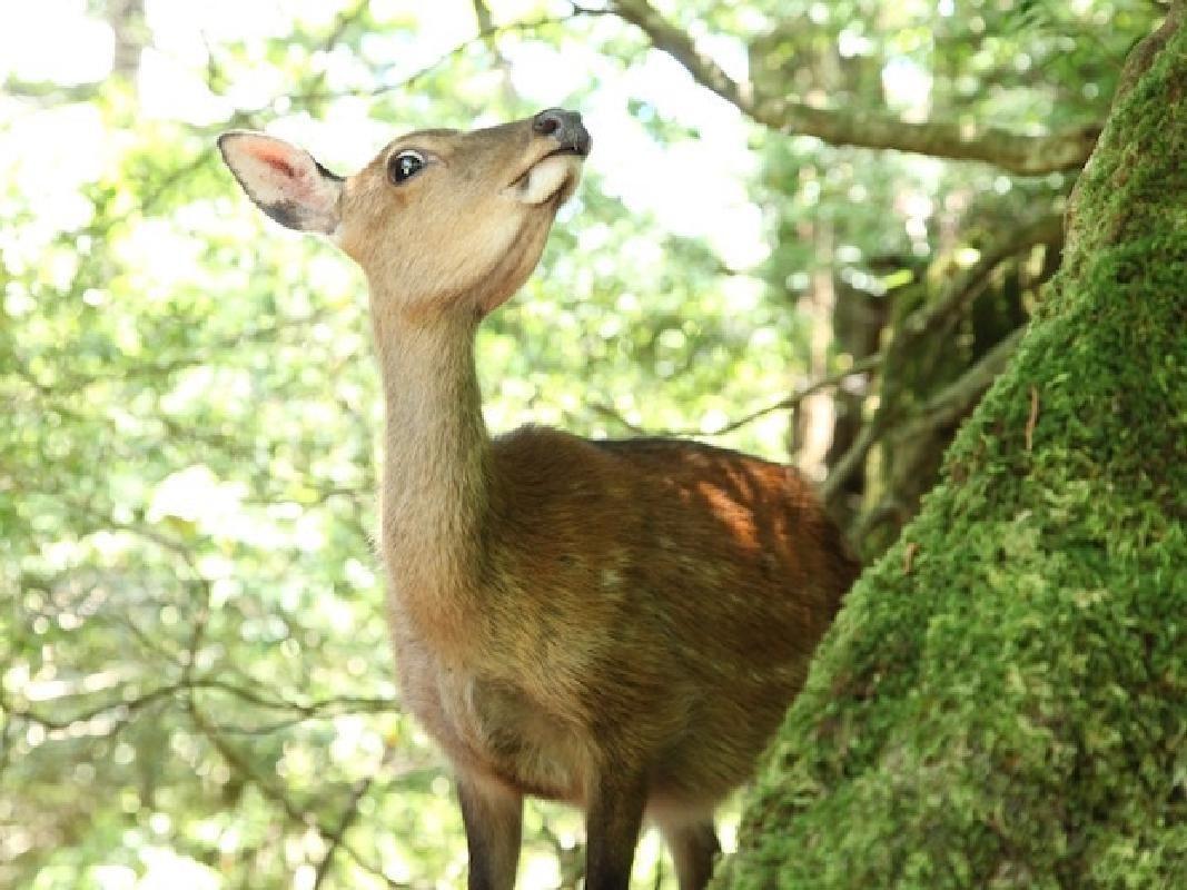 Trekking Adventure to Yaku Cedar Trees in Yakushima